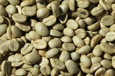fitoestrogeni-del-caffè