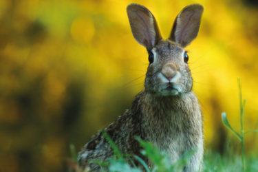 storia-coniglio