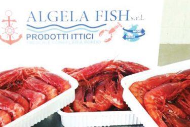 algela-fish